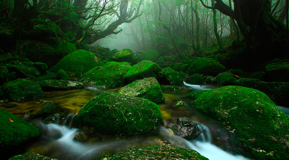 yakushima-forest