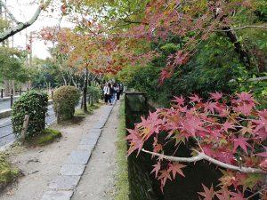 Paseo-del-filosofo--Creciendo-con-Japón