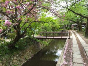 Día 5 – Kyoto: Pilar Naturaleza