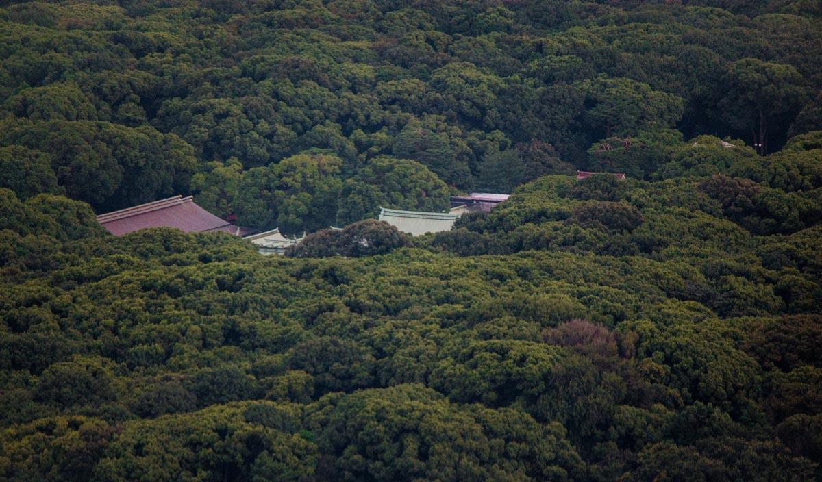 Vista aerea bosque santuario Meiji