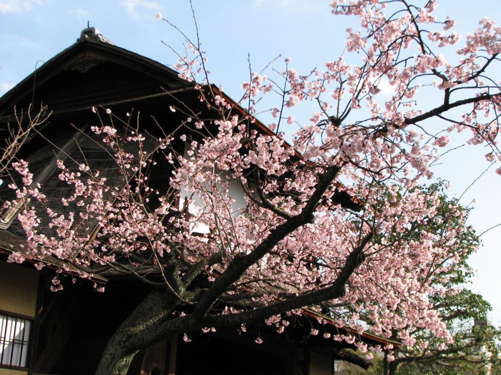 los jardines de Shoshei-en de Kyoto-2