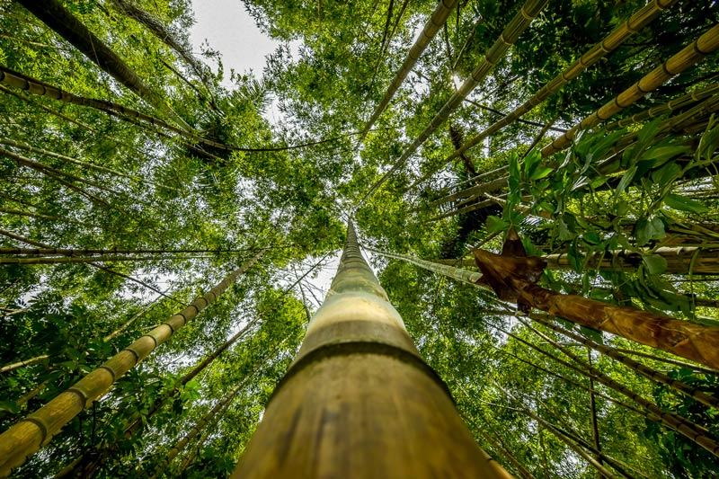 Luz entrando en bosque de bambú