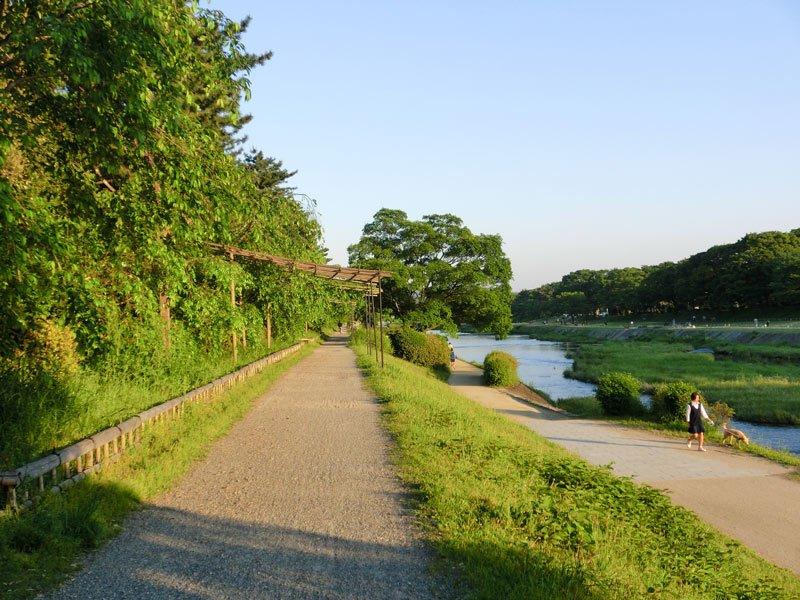 Paseo rio Kamo Kyoto