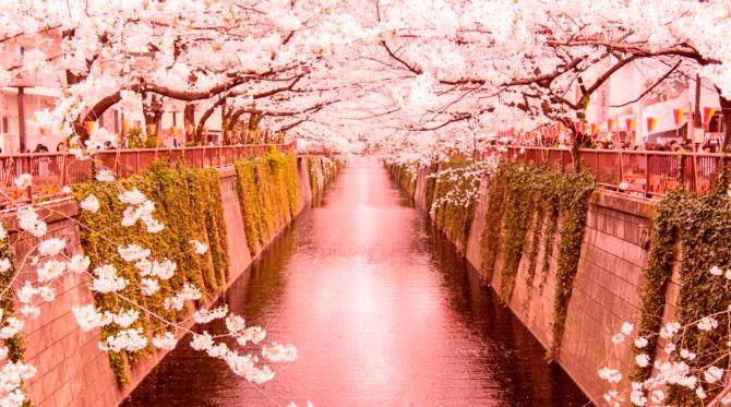 Canal Kyoto en sakura