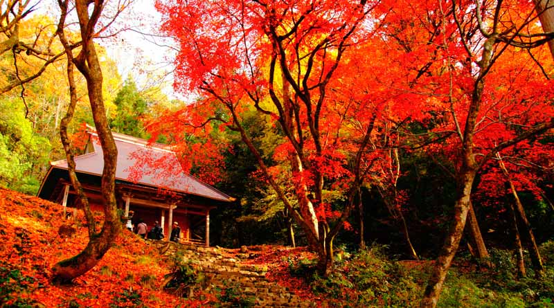 Templo en pleno Momiji