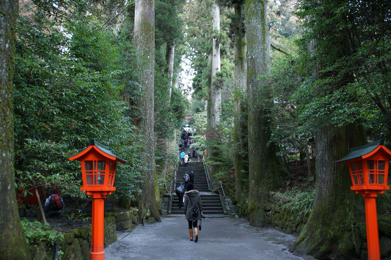 Santuario bosque