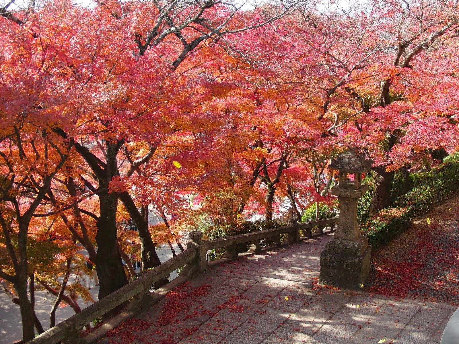 Momiji en el Kyomizu-dera