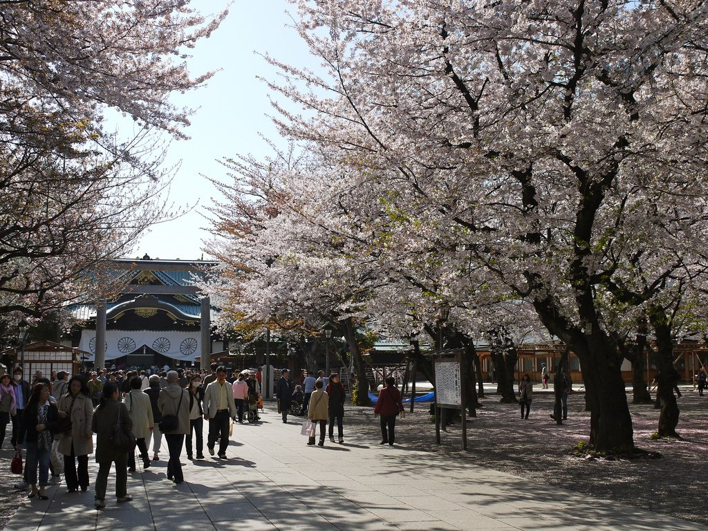 Sakura en el Yasukuni jinja