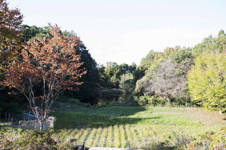 Jardines del Ushiku Daibutsu