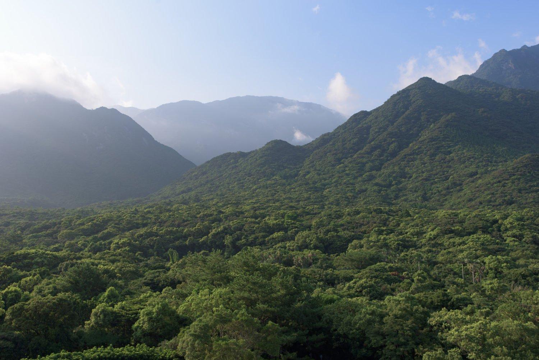 Bosques de Yakushima- CC sunoochi