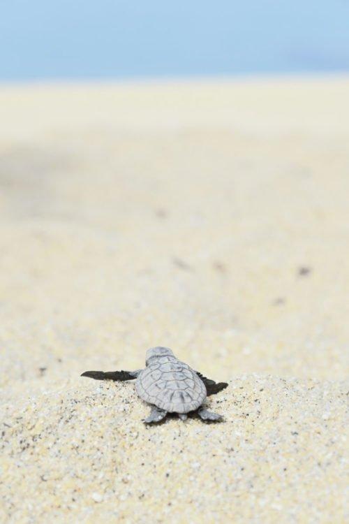 Tortugas en Yakushima- CC Kei Muratagawa