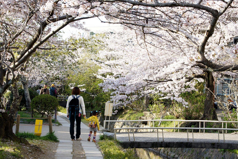 Camino de la Filosofía en Kyoto