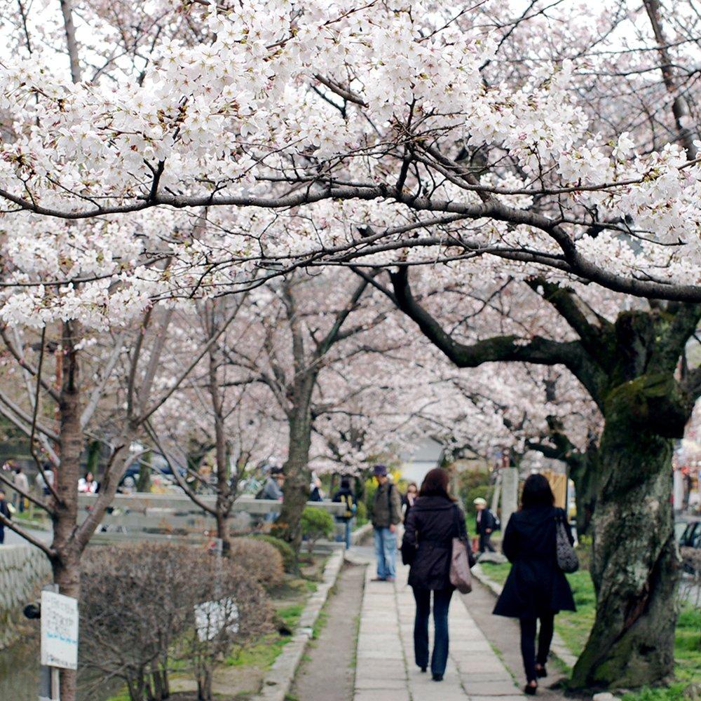 Paseo del Filósofo, al norte de Higashiyama