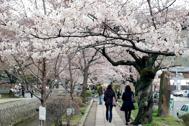 Paseo del Filósofo en Kyoto
