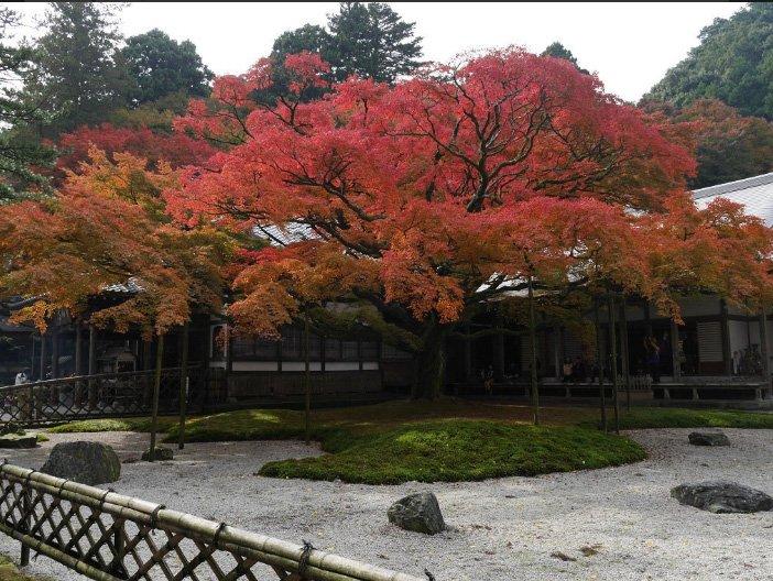 Okaede del Sennyoji-autora Yumiko