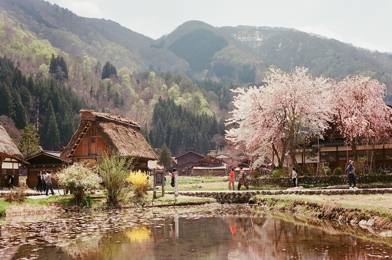 Shirakawago en pleno sakura