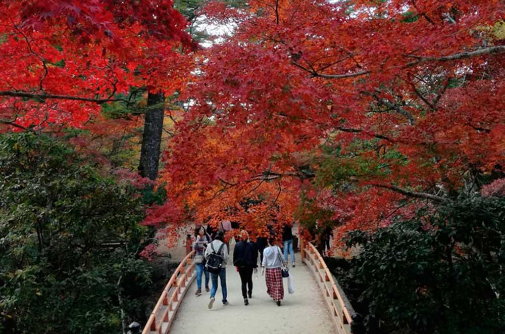Viaje Creciendo Japón