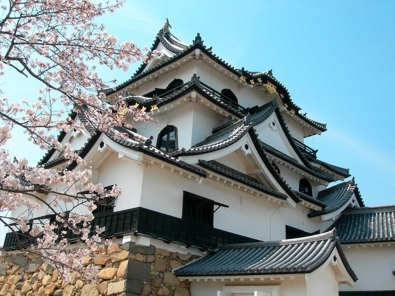 Castillo de Hikone desde abajo